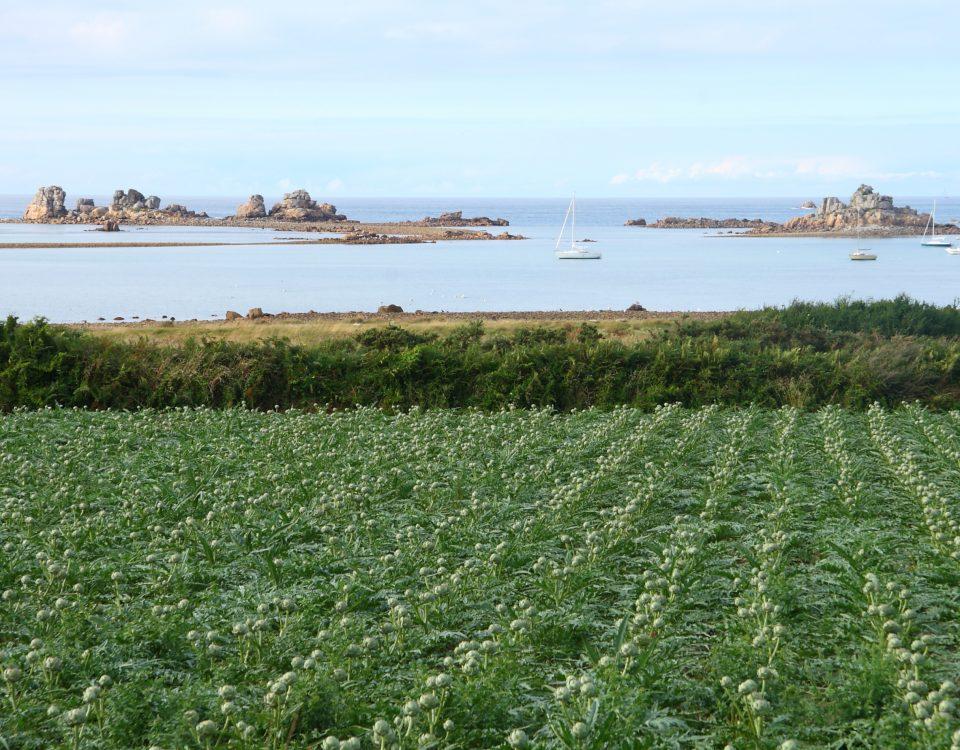 Découvrir l'agriculture bretonne